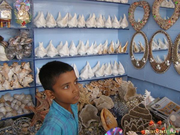 Маленький продавец больших ракушек